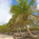 Insel Isla Catalina